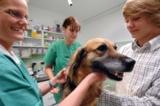 Finanzielle Sicherheit bei Tier-OPs mit einer Tierversicherung der Uelzener