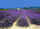 Farbenrausch in der Provence