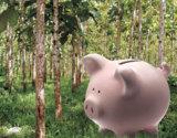 Sparen mal anders: Das WaldSparBuch