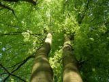 Die Versandapotheke Greenapo wächst beständig