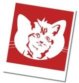 Andasa sucht das Katzengesicht 2011