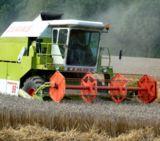 Getreideernte 2008 übertrifft Erwartungen (Foto: Proplanta)