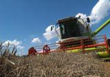 Getreideernte (Foto: Proplanta)