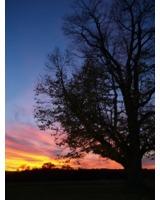 Sonnenuntergang im Naturpark (Foto: Proplanta)
