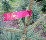 Christbäume aus heimischer Erzeugung (Foto: Proplanta)