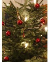 Weihnachtsbaum (Foto: Proplanta)