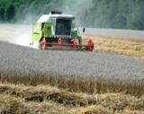 Getreideanbau (Foto: Proplanta)