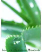 Aloe Vera: Gesundheit durch die Wirkung der Aloe Vera Pflanz