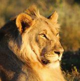 Der Löwe erwartet Sie bereits!