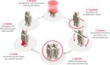 Von der Datenanalyse bis zur -übergabe an das ERP-System der komplette Zyklus des Datenmanagements