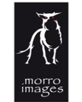 Wie von Zauberhand: Geisterhund von morro images