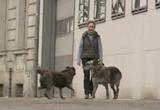 Helga Volkmer braucht Unterstützung zur Rettung der Hunde