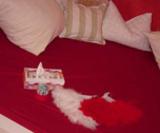 Rückzugs-Zimmer zur Weihnachtszeit