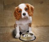 Die Tiertafel versorgt Tiere bedürftiger Menschen