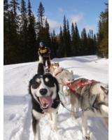 Voll im Trend: beim Husky-Workshop mit den Schlittenhunden durch die verschneite Winterlandschaft.