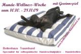 Wellness für den Hund von Bettenhaus Traumhund