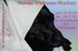 Vom 10.10. – 28.11.09  Hunde-Wellness im Bettenhaus Traumhund