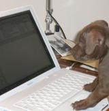 Professioneller Bürohund