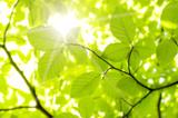 Die Stuttgarter Fraunhofer-Institute legen ihren ersten Nachhaltigkeitsbericht vor