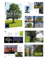 Der Baum  - Bäume beeindruckend fotografieren
