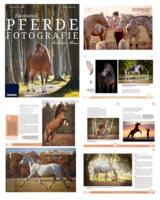 Professionelle Pferdebilder für Züchter, Pferdesport und Tierliebhaber