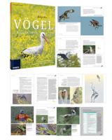 Fotoschule Vögel fotografieren - eine Königsklasse der Naturfotografie