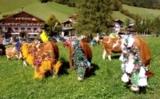 Im Zuge des 55. Wildschönauer Talfests (05.–08.08.10) findet auch der große Almabtrieb statt.