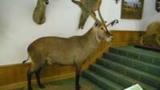 Das Jagdmuseum Wulff in der Südheide Gifhorn