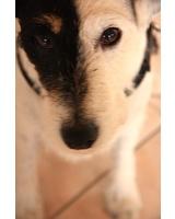 Hundebetreuung ganz entspannt. So kann Weihnachten 2010 kommen