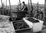 Am Anfang standen Produkte für die Landwirtschaft, innovative Behälter für den Weinbau