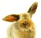 Der Osterhase liebt Wellnessanwendungen. Bild: Fotolia