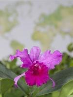 Orchidee vor dem Stift