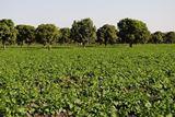In Westafrika überzeugte sich der Trading-Partner ad-trade von der Produktvielfalt der Produzenten.