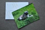 Verbesserte Papierqualität bei Fotoabzügen