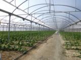 Gurken soweit das Auge reicht: Im warmen Klima Spaniens gedeihen Gemüsepflanzen in Hülle und Fülle.