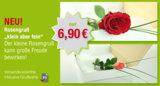Rose inklusive Grußkarte, Porto und Verpackung nur 6,90 €
