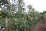 Oktober ist die perfekte Pflanzzeit und andere Obst- und Laubgehölze
