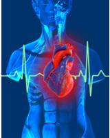 Weltherztag 2012: Rabatte auf Herzmodelle von 3B Scientific
