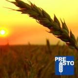 Weizenpreise werden stark fallen aufgrund möglicher Rekordernten in Russland und den USA