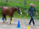 Cheval Trainings