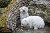 Norbert und seine Schwester Nela im Tierpark Hellabrunn