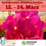 Orchideenbluete in der Biosphaere Potsdam mit Orchideengarten Karge