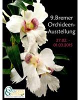 Dendrobium sanderae var. giganteum aus dem Orchideengarten Karge