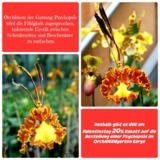 Satte Rabatte nur am 14. Februar 2015 bei uns im Orchideengarten in  Dahlenburg