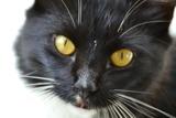 vs hilft bei der Auswahl der richtigen Katzenversicherung.