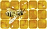 Bienen sparen 10 % Wachs durch die hexagonale Form der Honigwaben. Quelle: EMAMIDESIGN