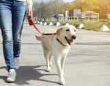Vor allem beim Gassigehen sind Hunde von Giftködern gefährdet.