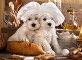 Kekse zu Ostern für den Hund - von www.mein-haustier.de kommen die Rezepte!