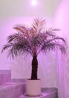 Pflanzen Überwintern mit ATUM LED von KLUTRONIC
