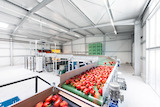 Christopher Domakis: Wittenberg Gemüse GmbH